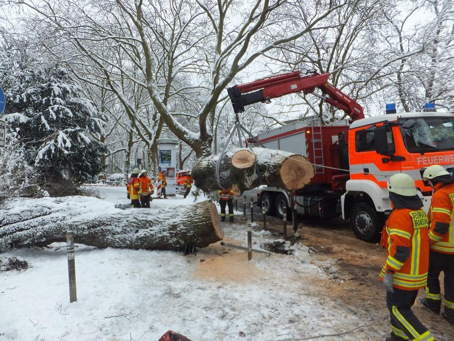 Durch Schneelast umgestürzter Baum beschäftigt Berufs- und Ortsfeuerwehr